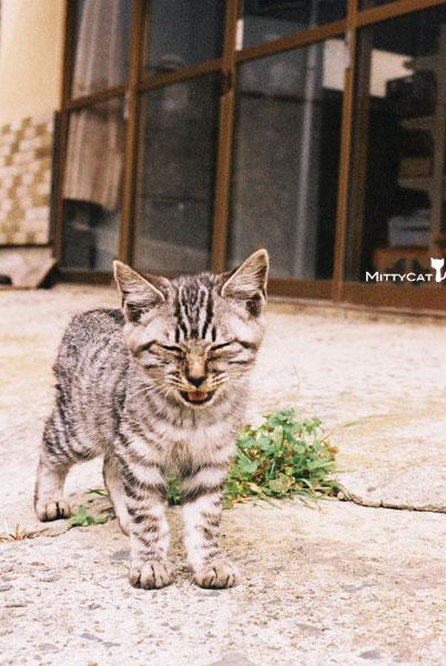 V-cat2009-04.jpg