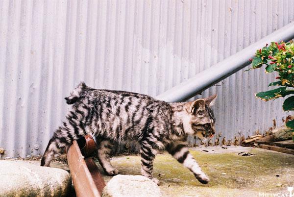 V-cat2009-05.jpg