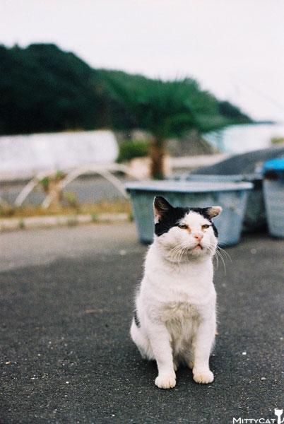 V-cat2009-06.jpg