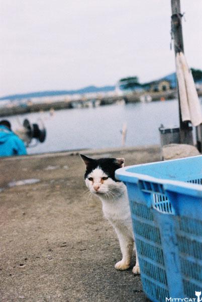 V-cat2009-08.jpg