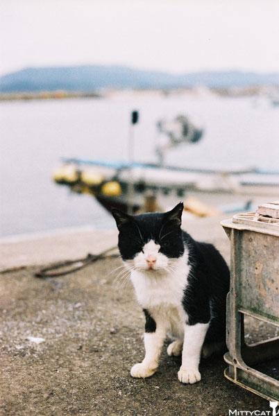 V-cat2009-09.jpg