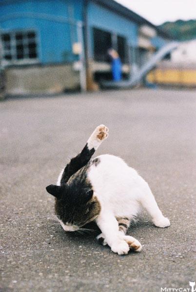 V-cat2009-10.jpg