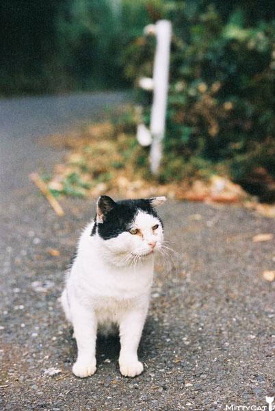 V-cat2009-11.jpg