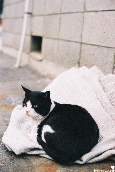 V-cat2009-12.jpg