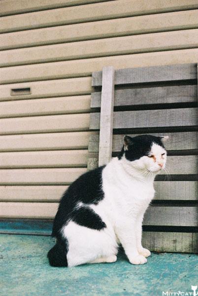 V-cat2009-13.jpg