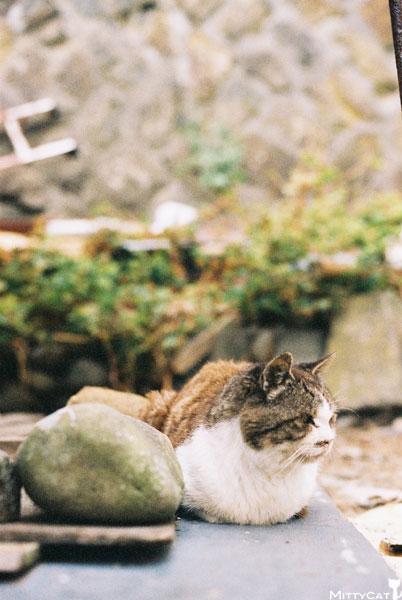 V-cat2009-14.jpg