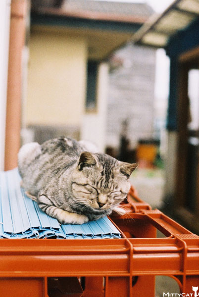 V-cat2009-15.jpg