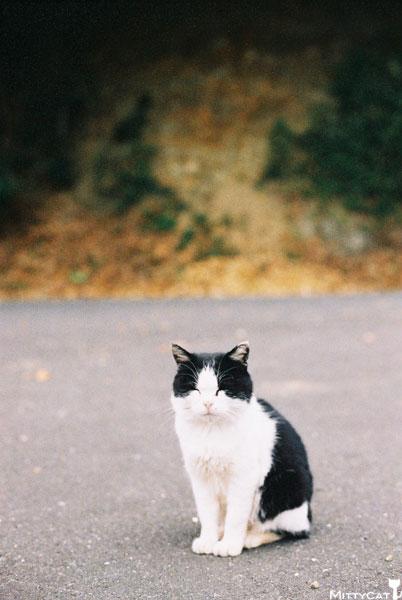 V-cat2009-16.jpg