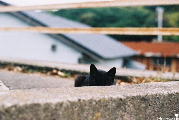 V-cat2009-17.jpg