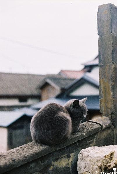 V-cat2009-18.jpg