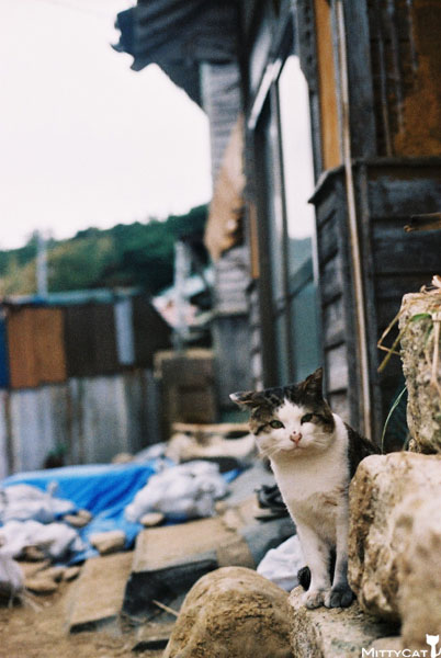 V-cat2009-20.jpg