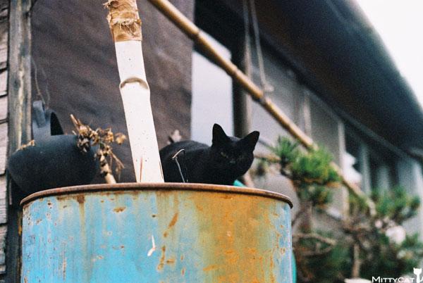 V-cat2009-22.jpg