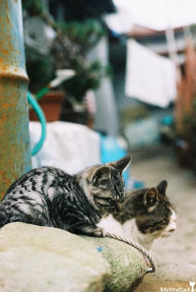 V-cat2009-23.jpg