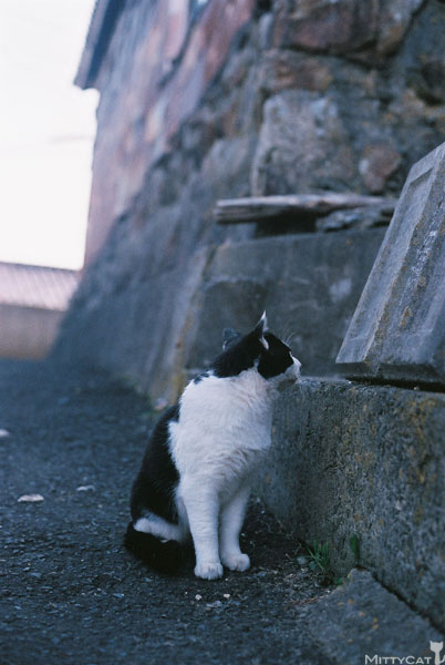 x-cat2009-01.jpg