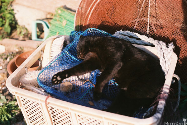 x-cat2009-02.jpg