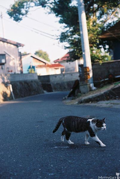 x-cat2009-04.jpg