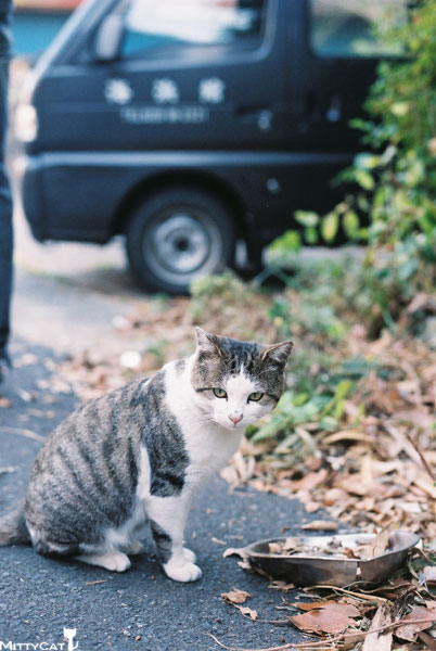 x-cat2009-05.jpg