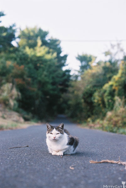 x-cat2009-06.jpg