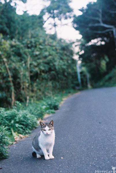 x-cat2009-07.jpg