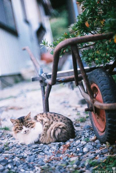 x-cat2009-08.jpg