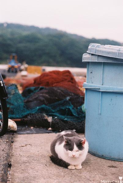 x-cat2009-14.jpg