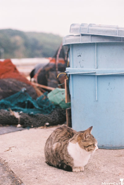 x-cat2009-17.jpg