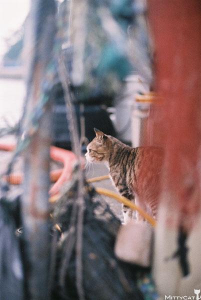 x-cat2009-18.jpg