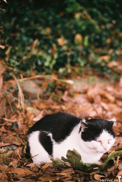 x-cat2009-19.jpg
