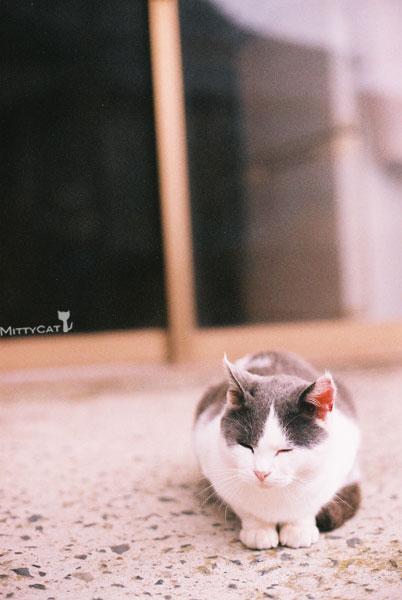 x-cat2009-20.jpg