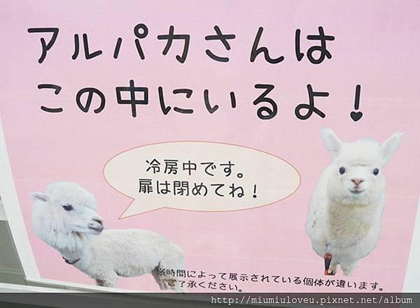 P1460999_副本.jpg