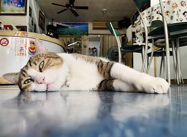 影藝攝影店內環境+貓咪_201022_0_副本.jpg