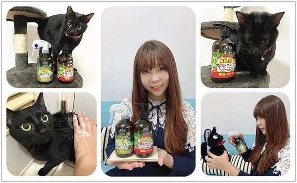 貓咪洗澡推薦_汪汪寶貝0.jpg