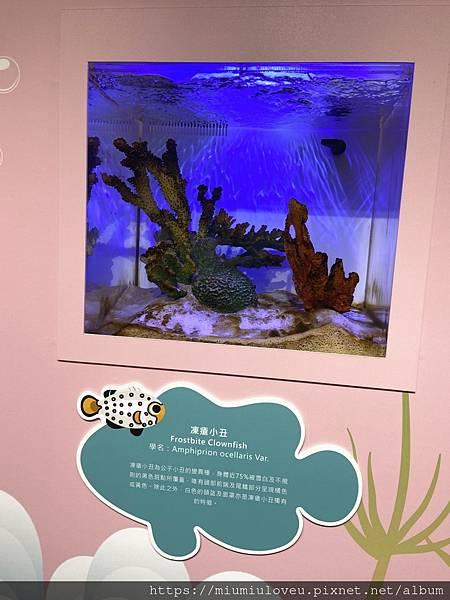 IMG_3217_副本.jpg