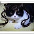 2008_0314MIWA0001.JPG