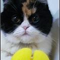 2008_0314MIWA0191.JPG