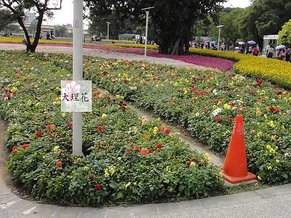 大理花20110418-8