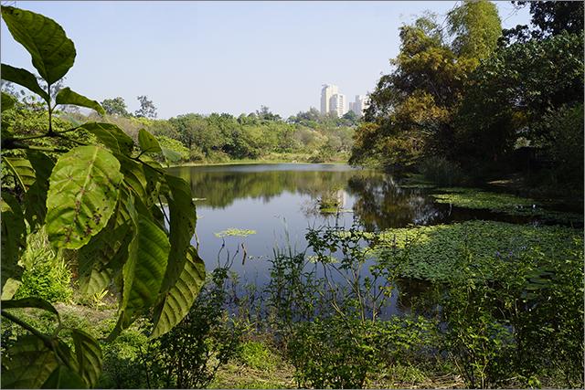 高雄鳥松濕地公園_7