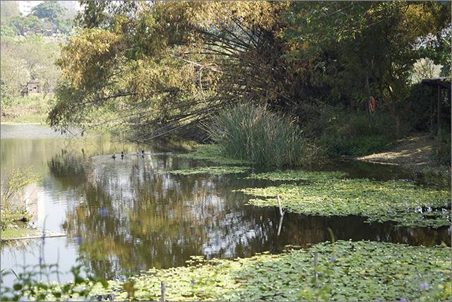高雄鳥松濕地公園_8