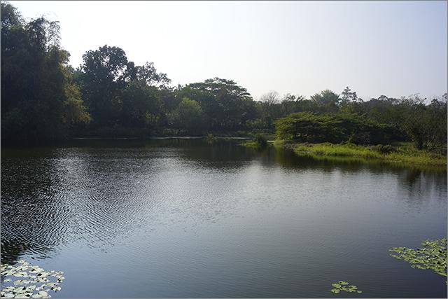 高雄鳥松濕地公園_15