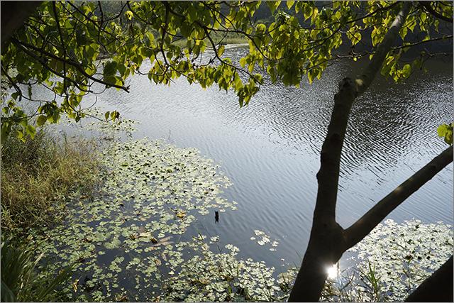 高雄鳥松濕地公園_16