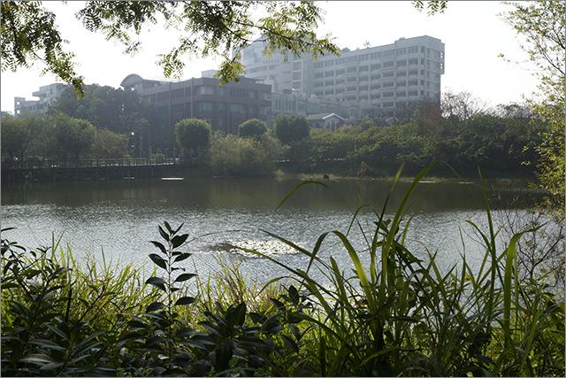 高雄鳥松濕地公園_21