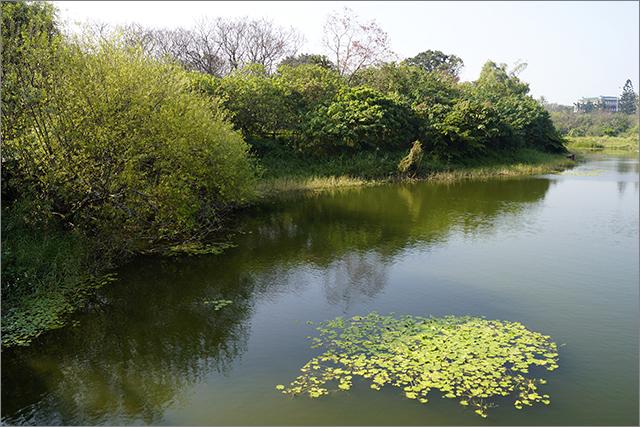 高雄鳥松濕地公園_32