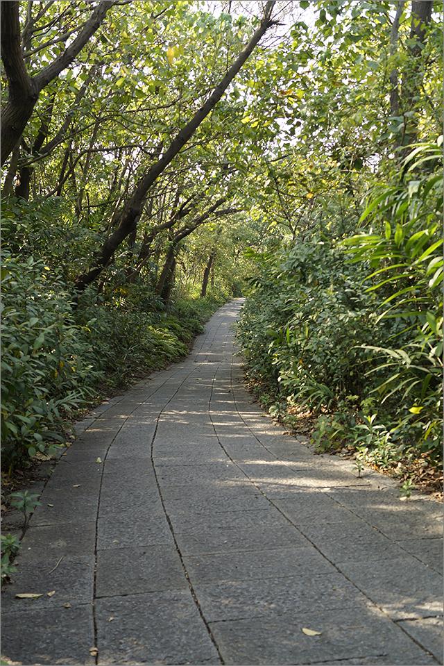 高雄鳥松濕地公園_33