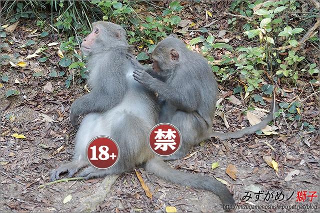 高雄柴山_34