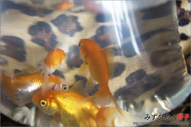 蓮花海砂栽植_54