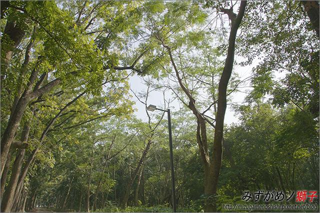 高雄新威森林公園_8