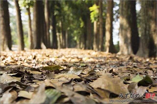 高雄新威森林公園_17