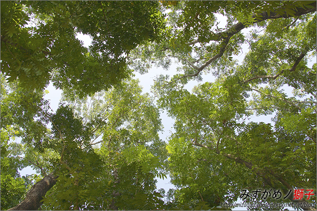 高雄新威森林公園_16