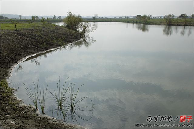高雄舊鐵橋溼地公園_11.jpg