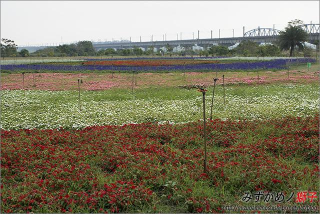 高雄舊鐵橋溼地公園_15.jpg